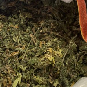 Biomasse without branches / untrimmed small buds  - Cannabis - Biomasse - Suisse
