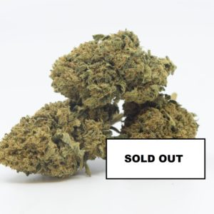 Amnesia 0.2 Greenhouse - Swiss Quality SOLD OUT - Cannabis - Fleurs - Suisse